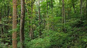 Over 8,000 Ha of forest cover destroyed annually