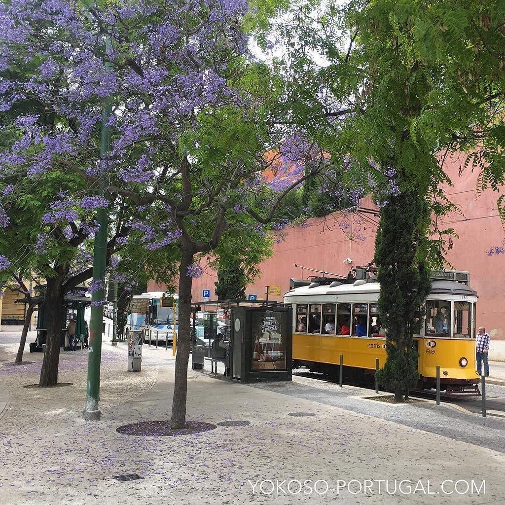 test ツイッターメディア - リスボンの黄色い路面電車と紫のジャカランダ。 #リスボン #ポルトガル https://t.co/NBNroc952C