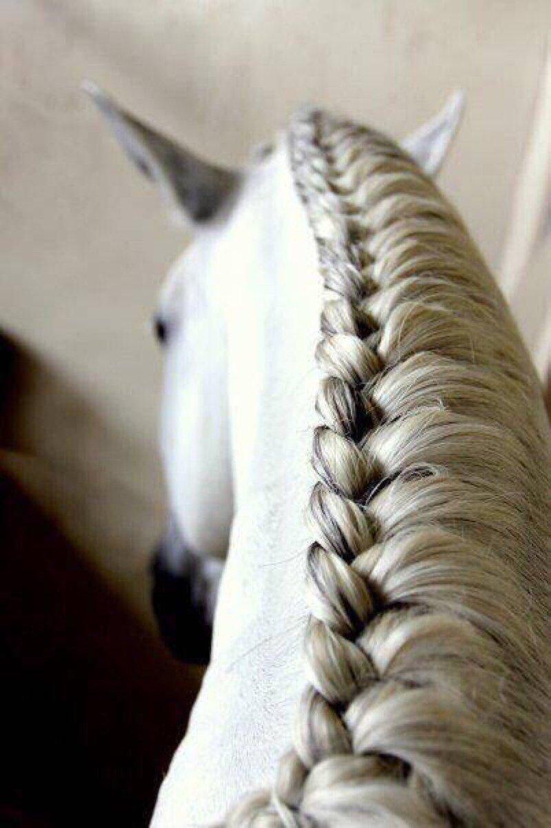 Как сделать причёску лошади