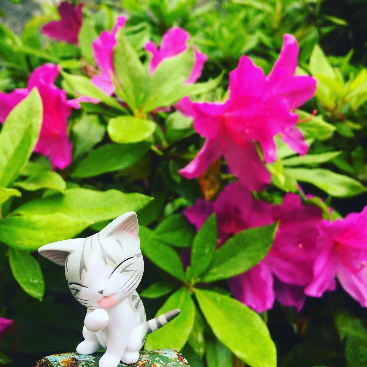 あたたかくなってきて チーのお散歩コースの公園にも たくさんのお花さいてて きれいなんら〜#こねこのチー #チーズスイー