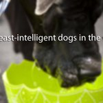 Data reveals the least-intelligent dog breeds