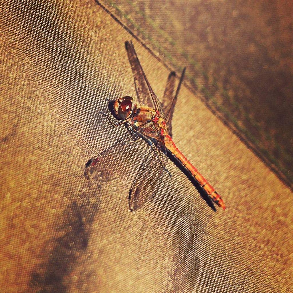 Lovely dragonfly. #carpfishing #session #photography #<b>Picoftheday</b> #wild #nature #carp #fishin