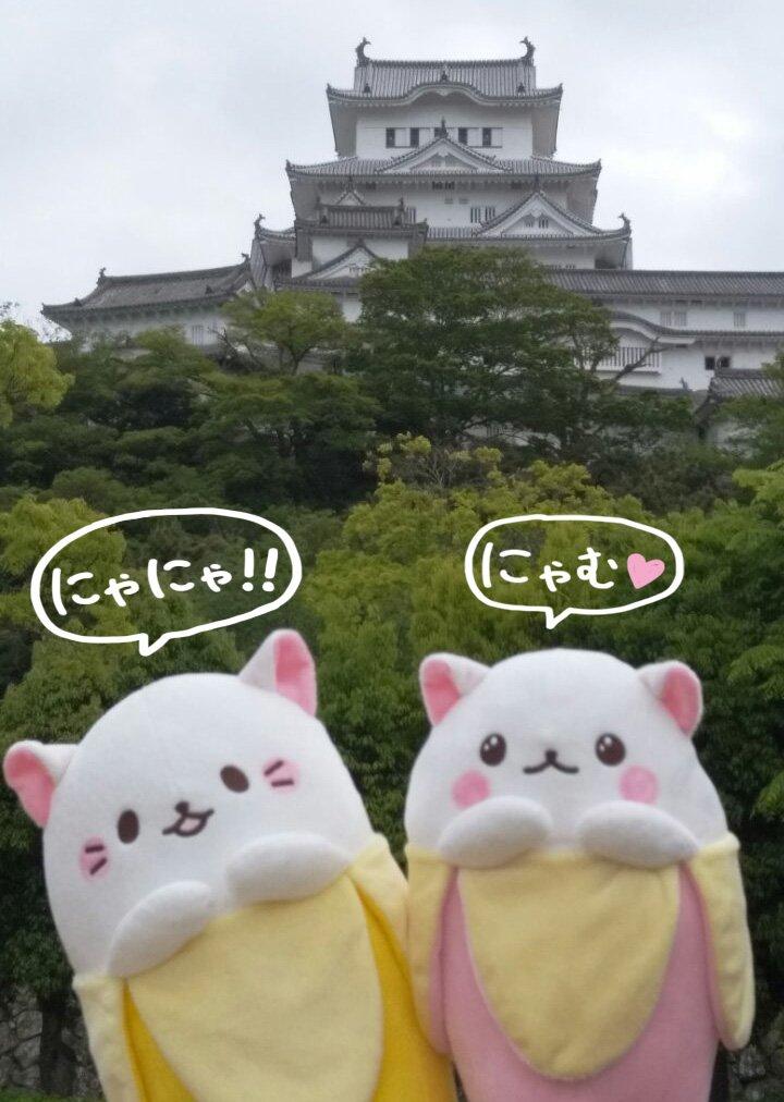 今日は #GW最終日 #博士の日 にゃ~。みんな連休はどうだったかにゃ?ばなにゃは #姫路城 にお出かけしたみたいだよ。