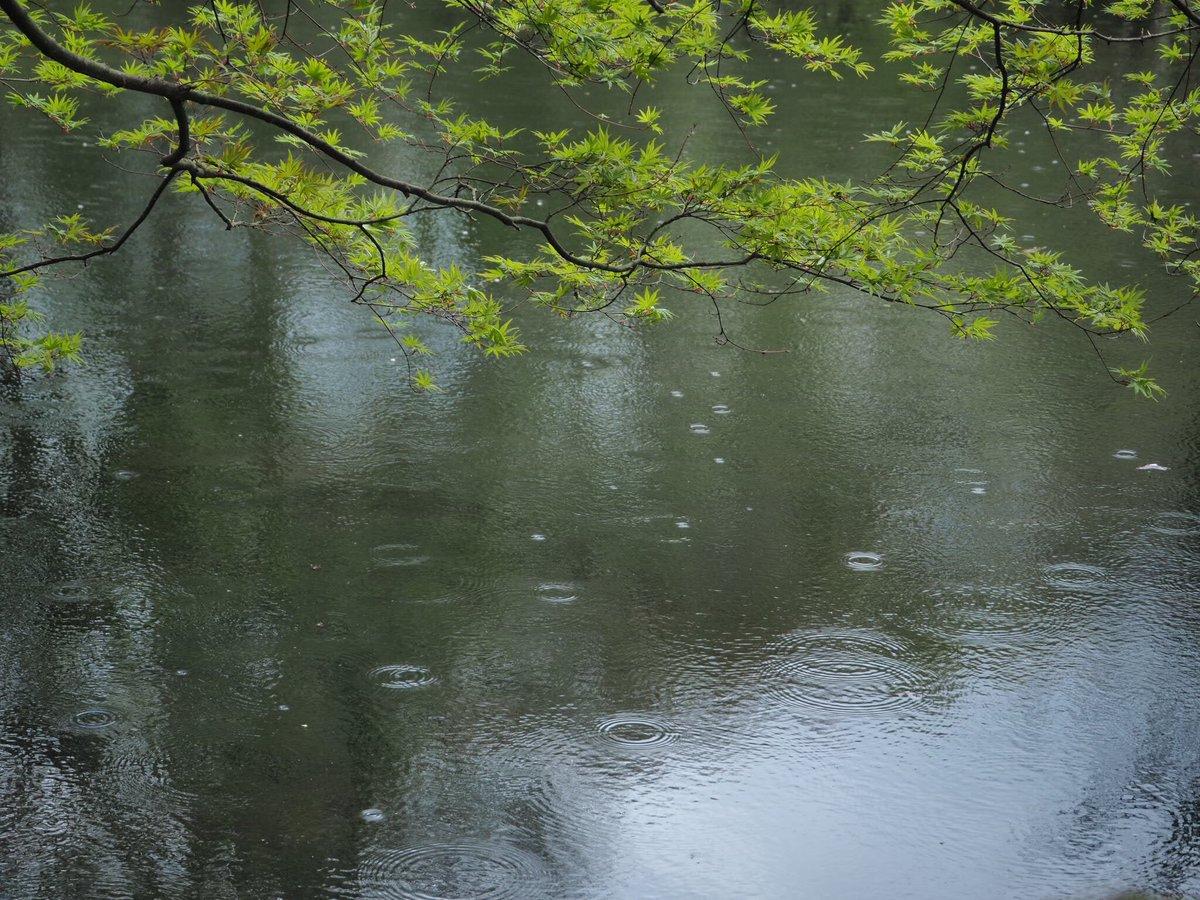 雲場池で言の葉の庭っぽい写真撮れた。#ファインダー越しのわたしの世界