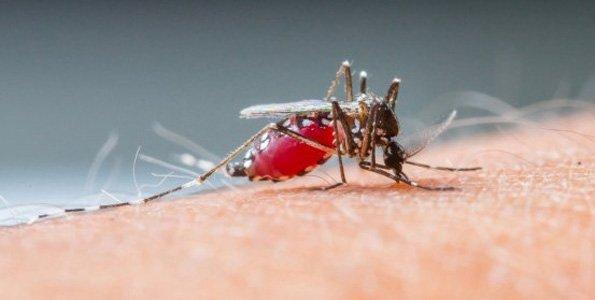Malaria torments 2 refugee camps