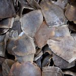 Pangolin scales worth RM9m seized