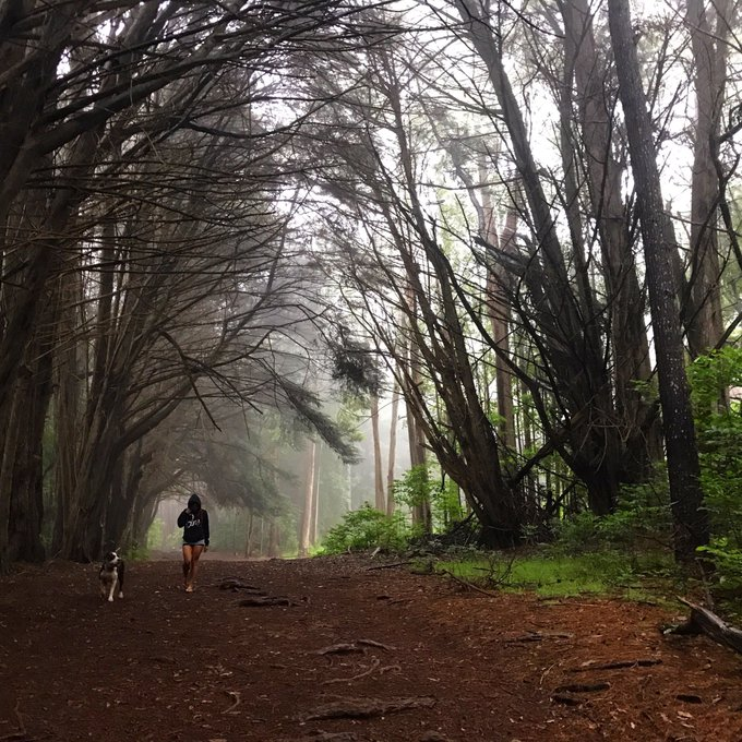 Journey to the rainy side of Maui to pick up the dogs today 🌲😍 https://t.co/Tt8z7ZZVL5