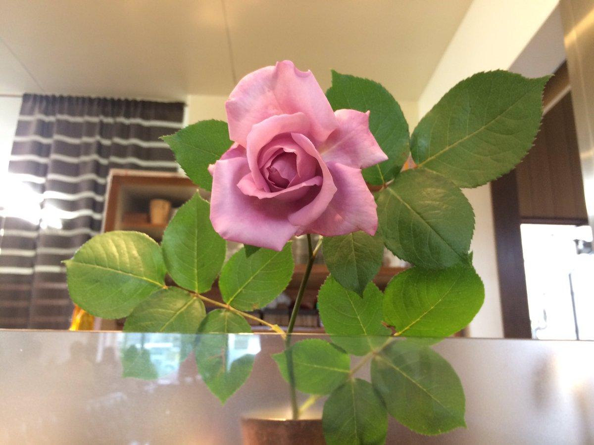 敷島珈琲店のガラスの三十代、ミサキです。紫のバラをいただきました゚+.゚(´▽`人)゚+.゚イイカオリ速水さんではなく、