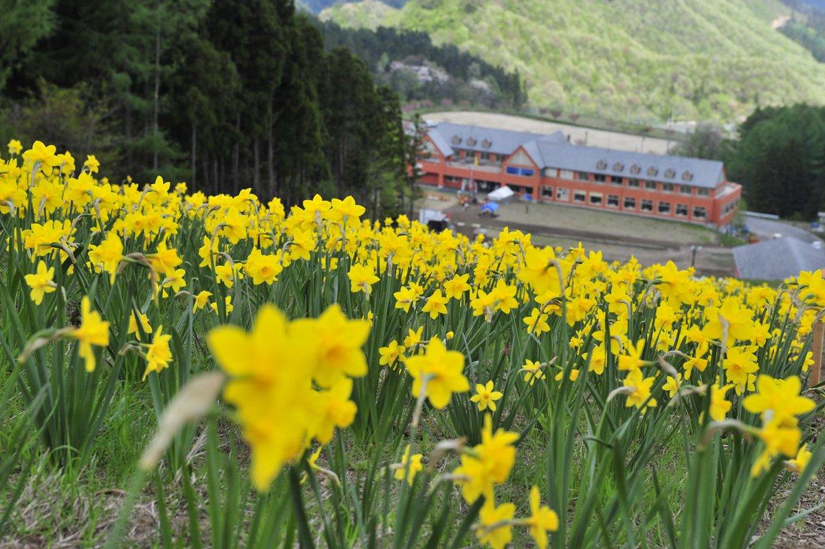 ノルン水上フラワーガーデンは5月21日(日)までです。最終日21日13時~お花のセールを開催します!1ケース詰め放題10