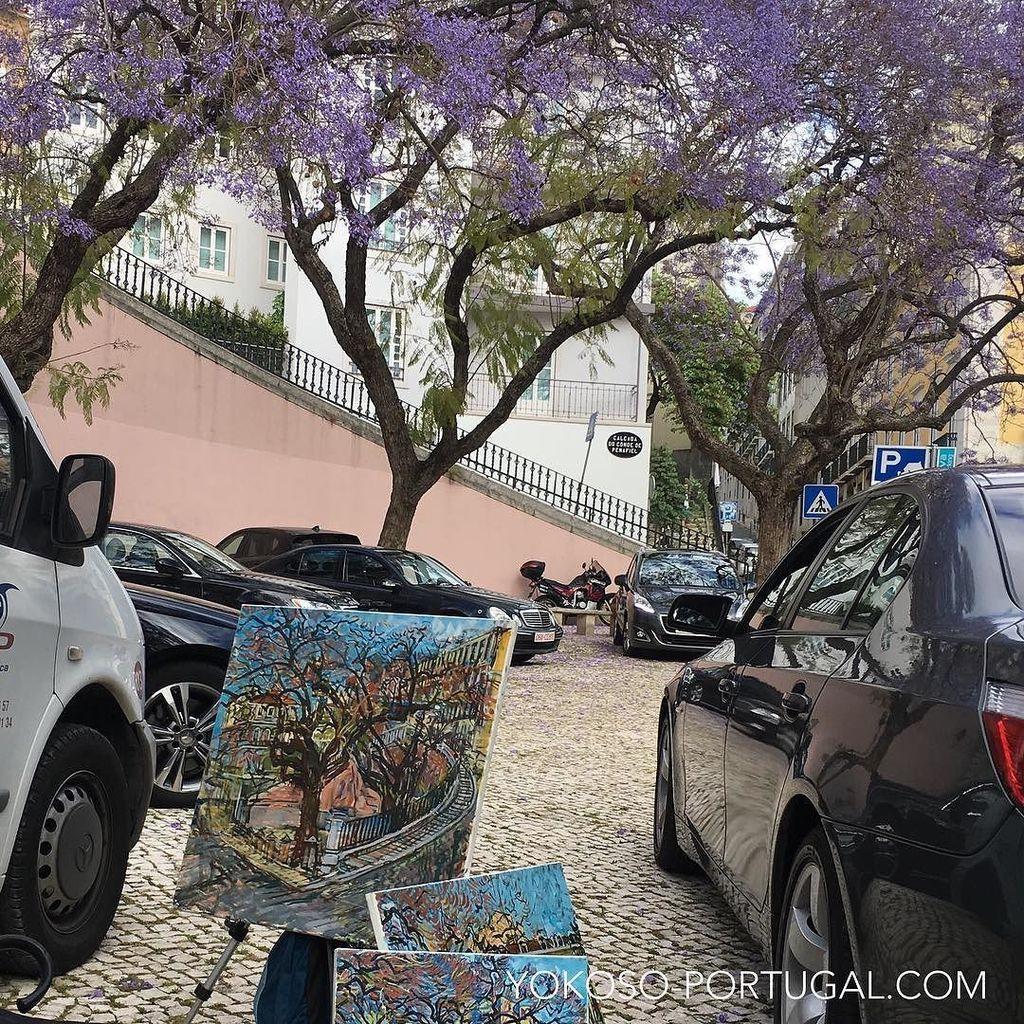 test ツイッターメディア - リスボンの街角を描き続けて十数年、日本人画家長島稔氏が描くジャカランダの花。 #リスボン #ポルトガル https://t.co/K1RQ4MiRdb