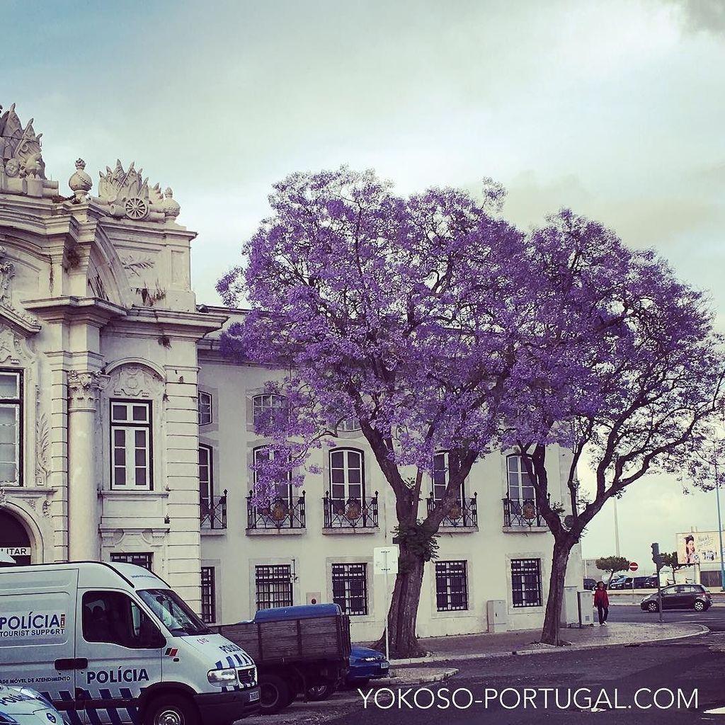 test ツイッターメディア - サンタ・アポロニアの軍事博物館前のジャカランダ。 #リスボン #ポルトガル https://t.co/OULXtdlPg4