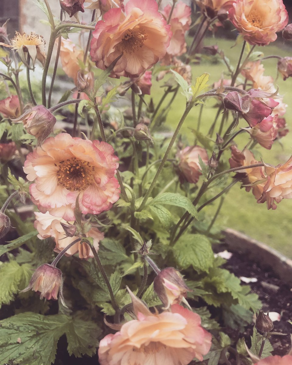 Geum one of my Favs ???? https://t.co/Hqw7bfEKRY