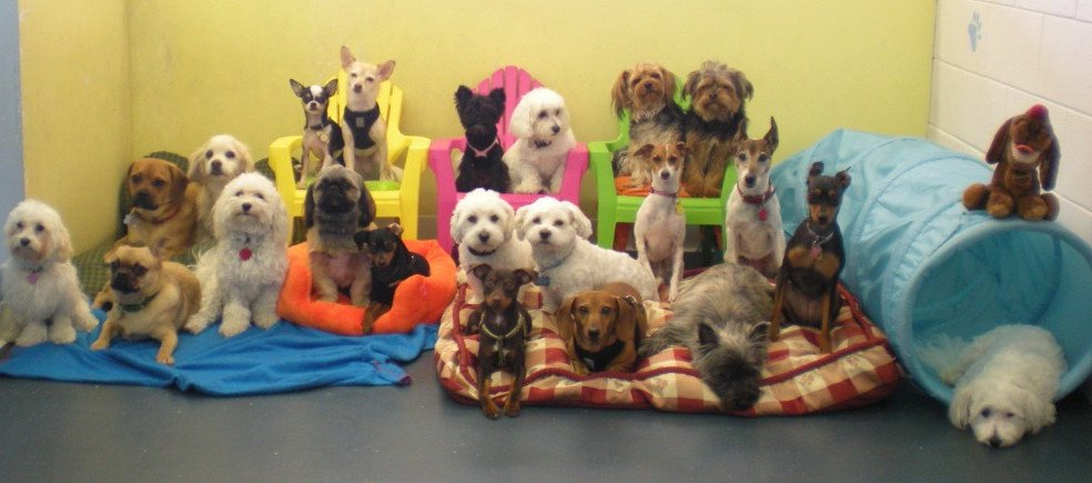 $21,315 Government Provided Loan For Doggy Day Care Business