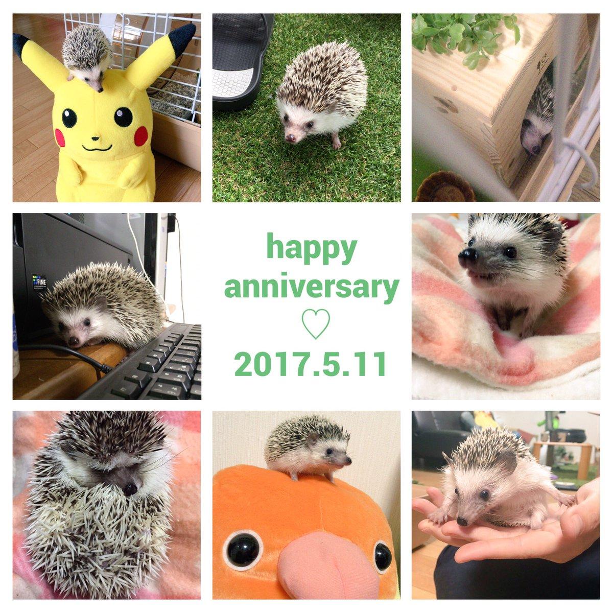 松太郎が我が家に来て、早いものでもう1年が経ちました。1年間、毎日癒されて本当に幸せいっぱいでした。相変わらずおケツは見