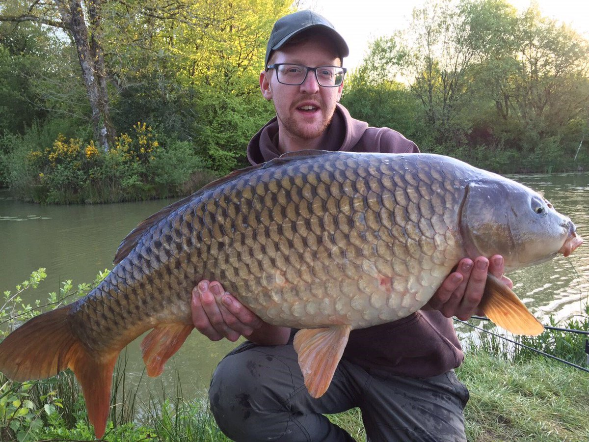SPECIMEN CARP LAKE PRODUCES THE BEAUTIES! #carpfishing #<b>Anglersparadise</b> https://t.co/JaBjgxYH