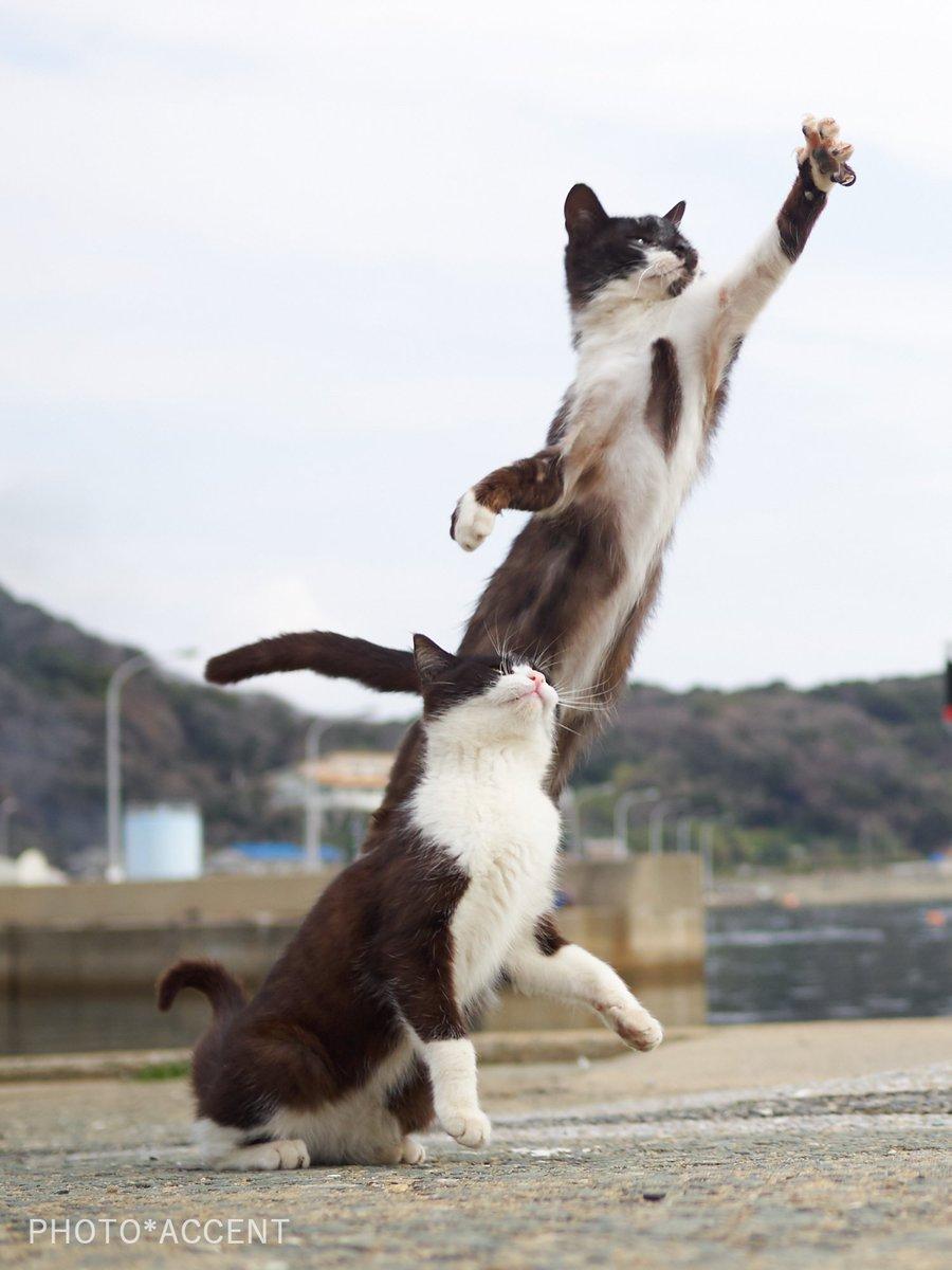 おいしそうな脚の女子校生 230脚目猫ガイジ隔離スレ [無断転載禁止]©bbspink.com->画像>4366枚