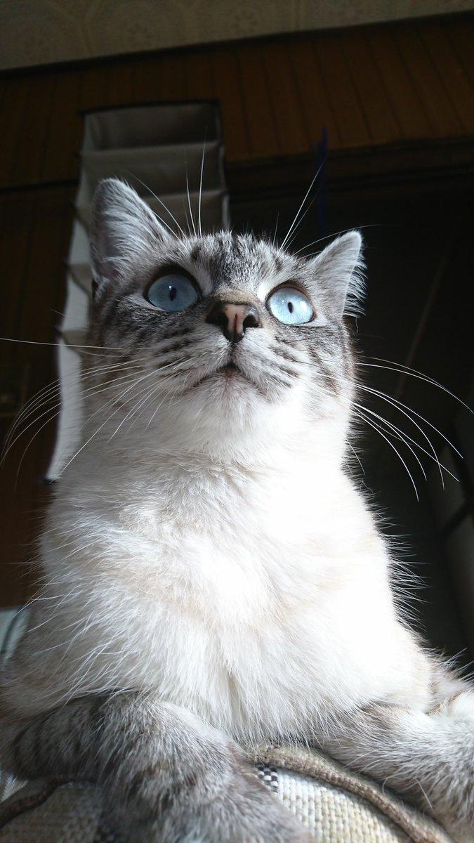 すごい顔してこねこのチー(猫のアニメ)見てる