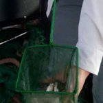 Scientists probe near extinct of Nile Perch