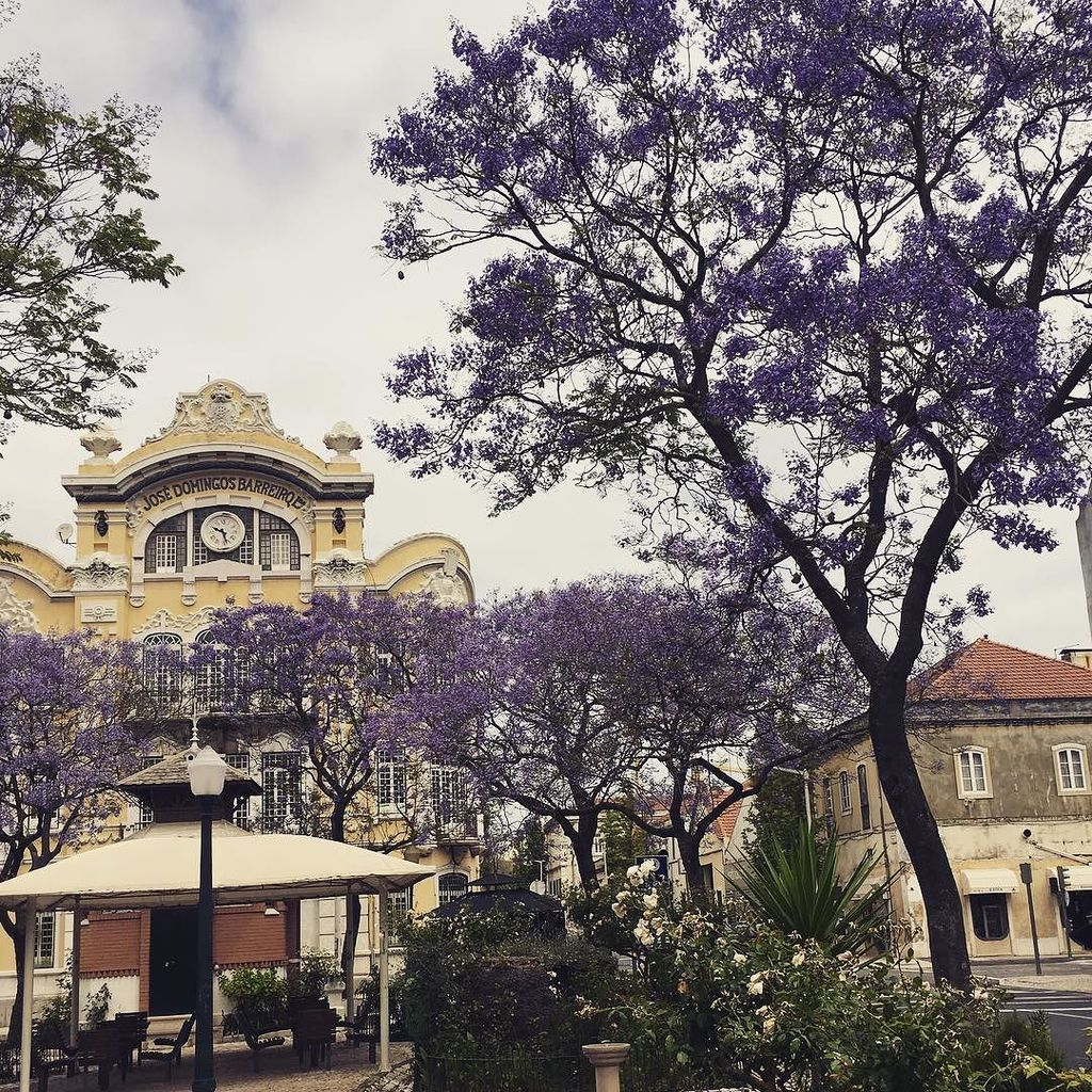 test ツイッターメディア - リスボン、David Leandro da Silva広場のジャカランダ。 #リスボン #ポルトガル https://t.co/3RqYVNmIVU