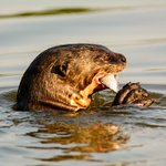 ICYMI - Otter dies @CalgaryZoo. #yyc https://t.co/XB5pg1qjDW https://t.co/NDWoTRvdxA