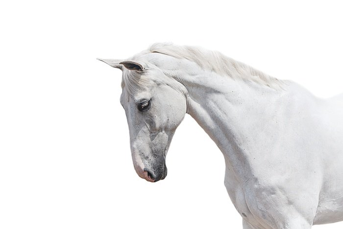 Stunning, emotional portraits of horses – https://t.co/eCNKWuvIEA https://t.co/bLPGUXVD6M