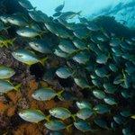 Islas chilenas albergan el mayor número de especies marinas únicas en el mundo https://t.co/tKBgmYO9cW https://t.co/7er3rr9nby