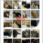 #URGENT #NYC 20 innocent #CATS need to find a #PAWFECTPAL by 2/10-PLS RT/adopt/foster/pledge https://t.co/aIWsshwwaA https://t.co/KBBsnZyghb