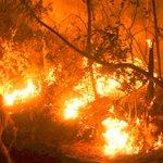 ACTUALIZACIÓN | Descontrolado incendio forestal consume al menos 3 hectáreas en Codegua https://t.co/vtpCiFqA0X https://t.co/EjSKEpewi9