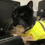 #ICYMI: Felix the Huddersfield Station cat promoted to senior pest controller https://t.co/YewauK70RW https://t.co/EJlCm7uKR1