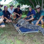 Cattle & Dog eating crocodile removed from #TopEnd cattle station https://t.co/kp44BNF6ew @abcnewsNT @abclandline https://t.co/eDO8Au6RgM
