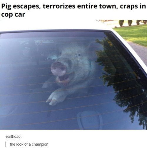 Most savage pig of all time