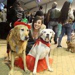 #huelva #carnaval Las mascotas también se disfrazan. https://t.co/v4SbsWj38K https://t.co/auQNtoUVbe