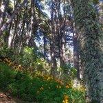 Y no haga taco en #Pucon visite nuestros #ParquesNacionales #Huerquehue #Araucania #Chile #Turismo https://t.co/xfbdHvjWSi