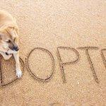 Juez de Arizona obliga a las tiendas a vender sólo animales procedentes de refugios #Adopta https://t.co/tSGQdS2qXW https://t.co/3YP8enBTsB