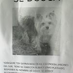 #Antofagasta #DogLover amigos les agradecemos su difusión para encontrar a esta perrita por favor, gracias! https://t.co/kKPPBu8DgQ