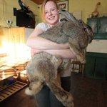 В Шотландии ищут новый дом для гигантского кролика: https://t.co/O6ApmjdhSw #новости #Беларусь #Россия #Украина https://t.co/21JE6qIJtV