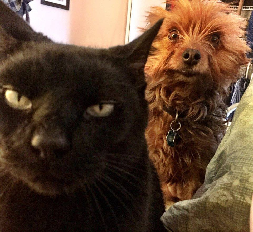 When the cat is plotting to kill you and the dog is trying to warn you ... https://t.co/JE8qiInYEw