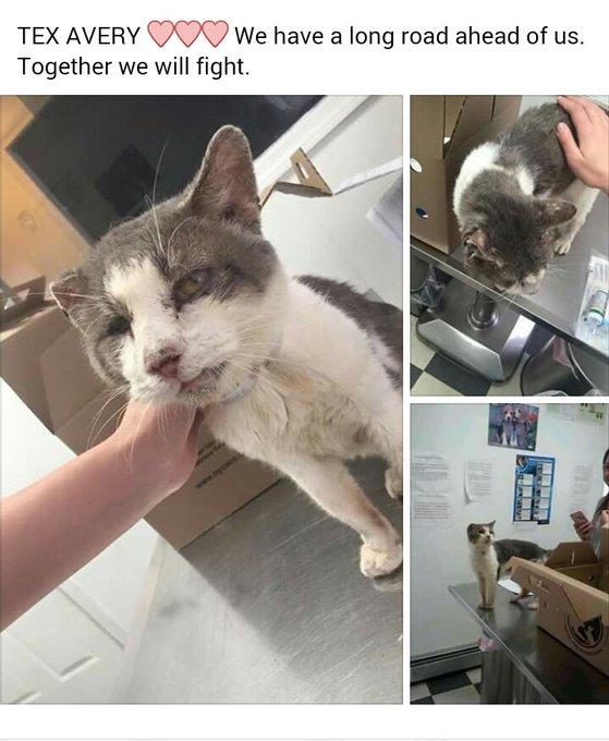 RT @MeowMiya88: Feral Cat TNR Fund for Tex Avery's mom Adriana  https://t.co/eCHAGR0qJa #NYC #cats #catsarefamily