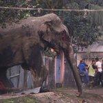 Un elefante salvaje causa conmoción en una ciudad india https://t.co/ATqPqQrcAQ https://t.co/L1X7w09kR1