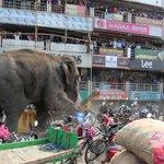 Un elefante salvaje hizo retumbar una ciudad india, aplastando lo que encontró a su paso https://t.co/ATqPqQ9Bcg https://t.co/arphqdeyuZ