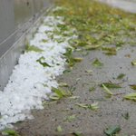 """Queanbeyan has experienced a """"supercell"""" storm with hail the size of golf balls decimating the town. #queanbeyan https://t.co/z0NlxGODa3"""