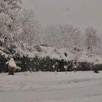 Heavy #Snowfall at #Bhurban #Murree #Rawalpindi #Pakistan #Cityinwhite #Pakistaninpics #beautifulPakistan #VisitPk https://t.co/qidWFQKOWm