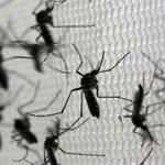 Ministério da Saúde confirma terceira morte pelo vírus da zika https://t.co/2PTZQ5h81u #G1 #Zika https://t.co/nJFsRNvO94