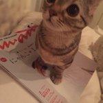 あのーananの猫特集、読みたいんですけど。。😂 pic.twitter.com/CmUT1196j…