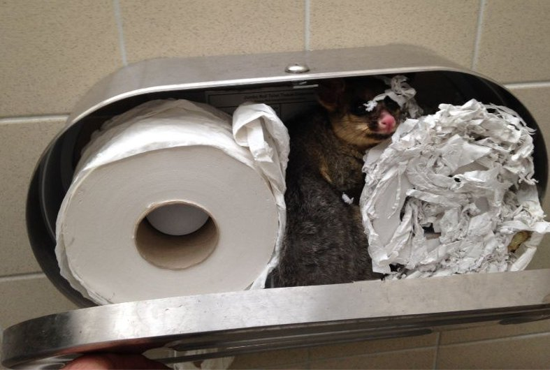 Possum found living in toilet paper dispenser at park https://t.co/kJwOnU0ljH https://t.co/KURxgETN2D