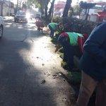 Colocación de pasto en camellón de Américas #Xalapa.@americozuniga @ComSocialXalapa @AytoXalapa https://t.co/A7ZNxAwmG7