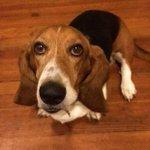 Roanoke residents seek answers after their basset hound, Starr, was shot in backyard: https://t.co/2hQSt1c2pF https://t.co/23mVNzayfr