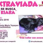 #EXTRAVIADA Kiara en la #CalleCuauhtémoc Col #SantaMaríaTepepan Del #Xochimilco #CDMX Ene 2016 https://t.co/icrrQODMqT
