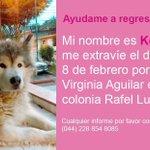 #Xalapa ????Ayúdalos a volver a casa @VialidadXalapa @rizzoenlanotici @mayteponm @RoxanaAAT @gaferat1 @paulatinamiau RT https://t.co/uw2nV8jRyL