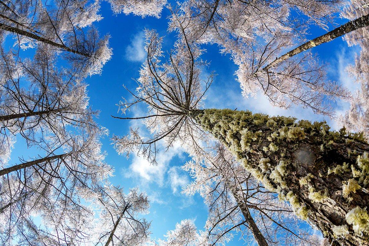 雨氷の森の中。サルオガセまでも雨氷で凍りついてました。 青空と雨氷の枝の白さが美しいです。  #写真好きな人と繋がりたい  #ファインダー越しの私の世界 #雨氷 #森の中 #自然風景 #Landscapes https://t.co/oOCb1d2R8t